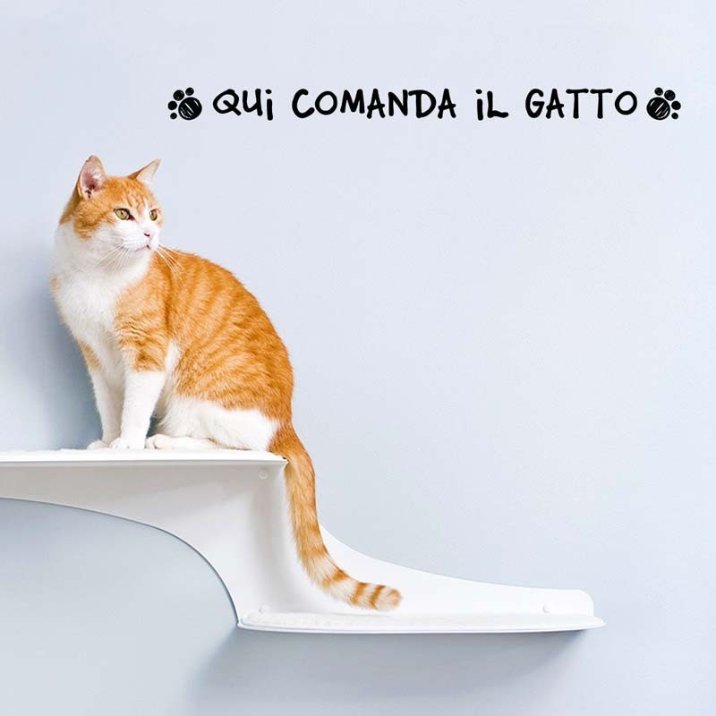 Qui comanda il gatto