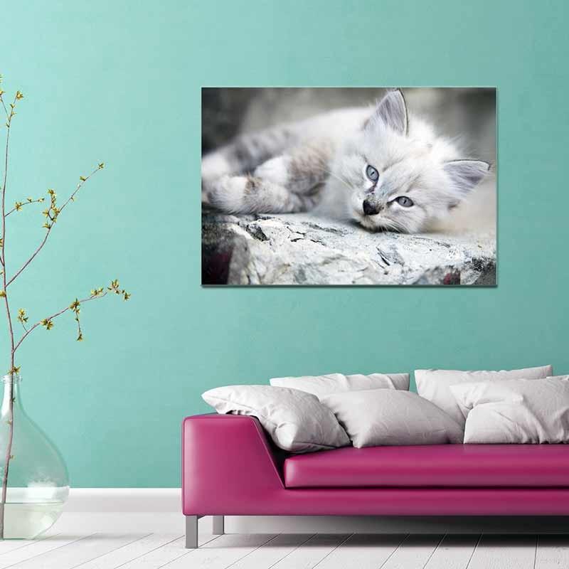 Bianco Gatto, Tela Canvas