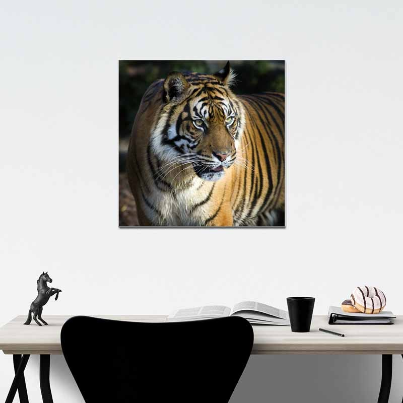 Tigre, Tela Canvas