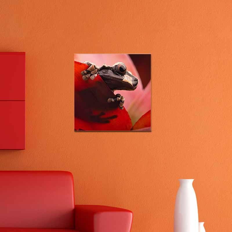 Rana su Rosso, Tela Canvas